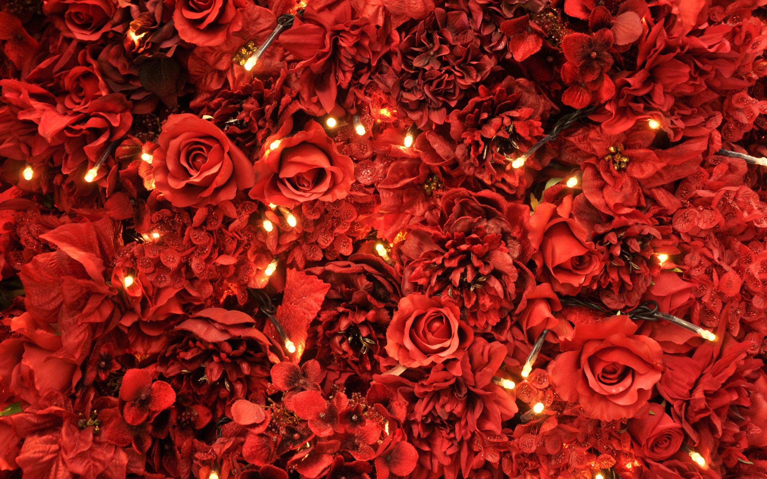 розы, лепестки, красные