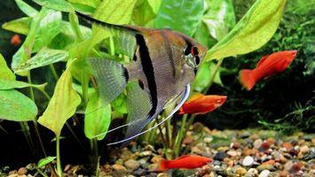Бесплатные фото рыбки,рыбы,красные,разноцветные,дно,море,подводный мир