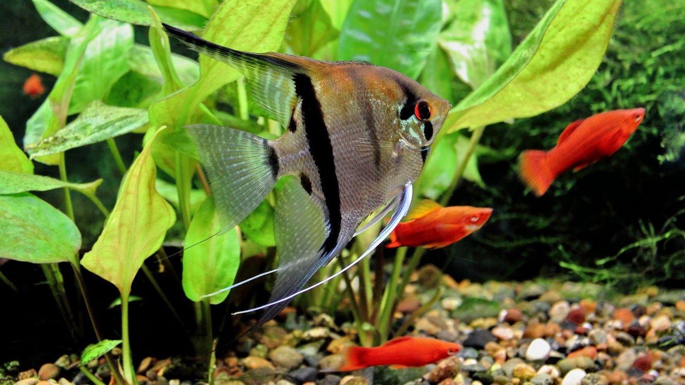 Фото бесплатно рыбки, рыбы, красные - на рабочий стол