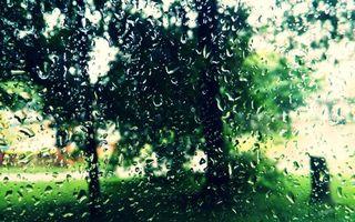 Бесплатные фото стекло,капли,дождь,подтеки,деревья,трава,разное