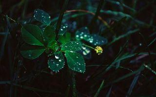 Фото бесплатно поле, капли, листья