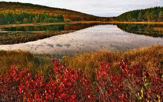Бесплатные фото вода,река,озеро,деревь,лес,горы,небо