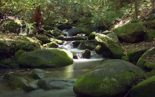 Бесплатные фото вода,река,водопад,камни,трава,мох,берег