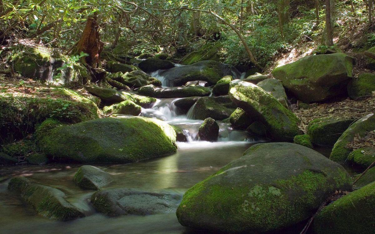 Фото бесплатно мох, берег, вода - на рабочий стол