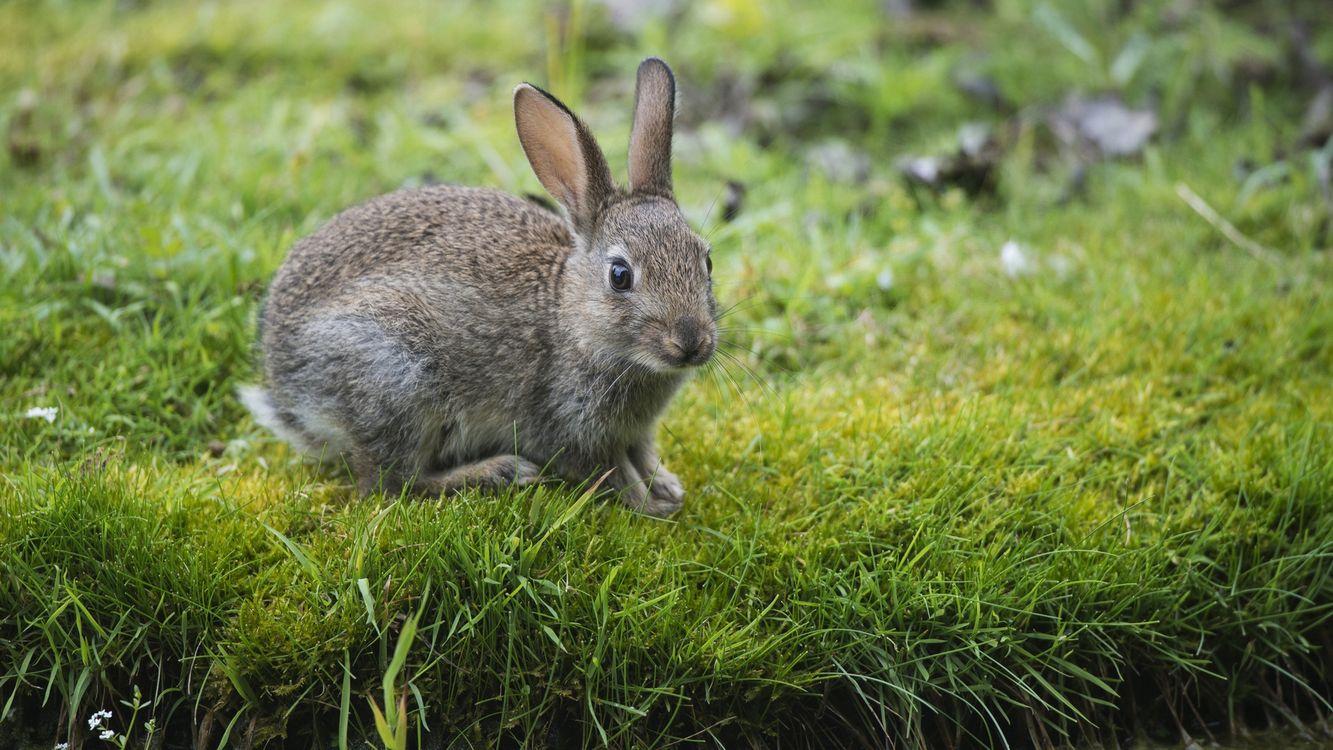 Фото бесплатно заяц, уши, глаза - на рабочий стол