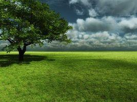 Бесплатные фото поле,трава,дерево,перед грозой,тучи,грозовые,лето