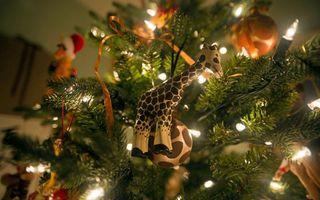 Фото бесплатно огни, новый год, гирлянда