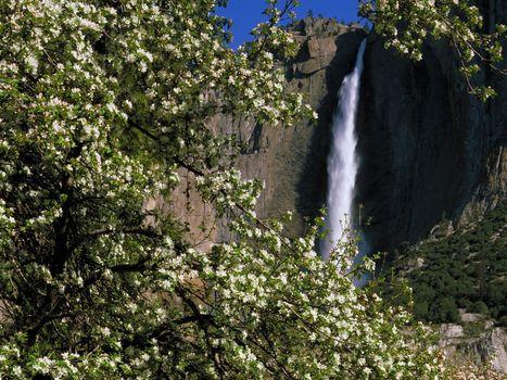 Бесплатные фото водопад,деревья,лето,природа