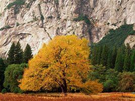 Бесплатные фото дерево,осень,желтые,листья,листопад,гора,природа