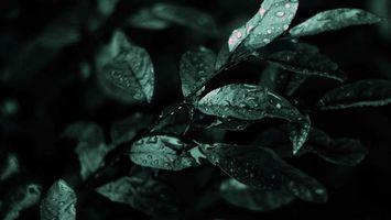 Заставки дождь, мокрые, листья, фото, черно-белое, макро