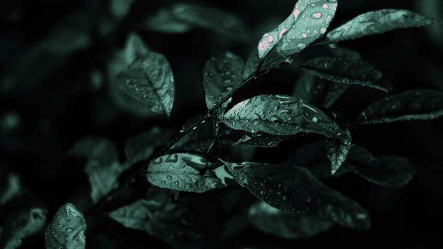дождь, мокрые, листья, фото, черно-белое