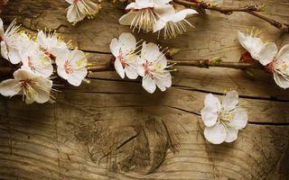 Обои доски, ветка, яблоня, цветы, лепестки, тычинки