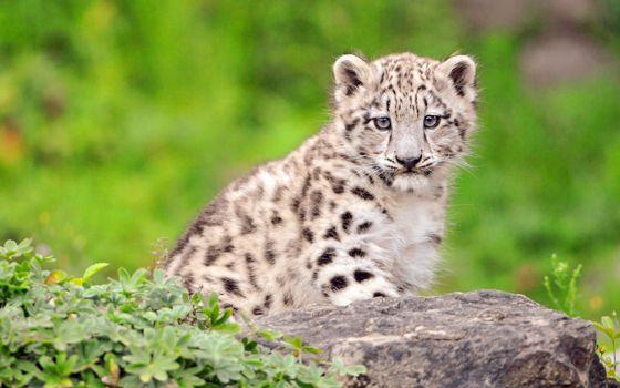 Бесплатные фото хищник,животное,охота,шерсть,мех,животные
