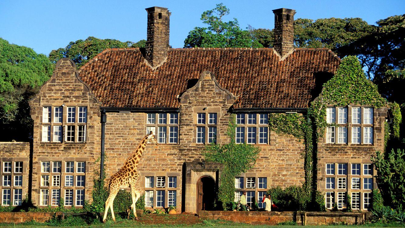 Фото бесплатно жираф, здание, дом, окна, трава, деревья, разное, разное