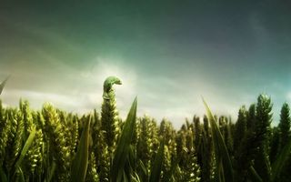 Обои жук, трава, рожь, овес, пшеница, колосья, колоски, семена, сидит, ящерица, поле, насекомые