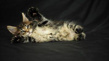 Фото бесплатно кот, шерсть, котенок