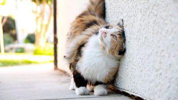 Бесплатные фото любитель,почесаться,стена,кот,шерсть,наслаждение,кошки