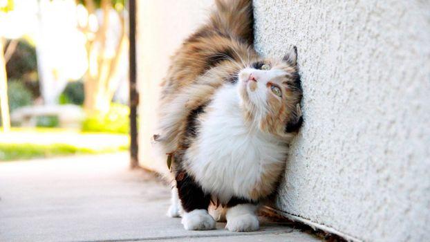 Бесплатные фото любитель,почесаться,стена,кот,шерсть,наслаждение,кошки,юмор