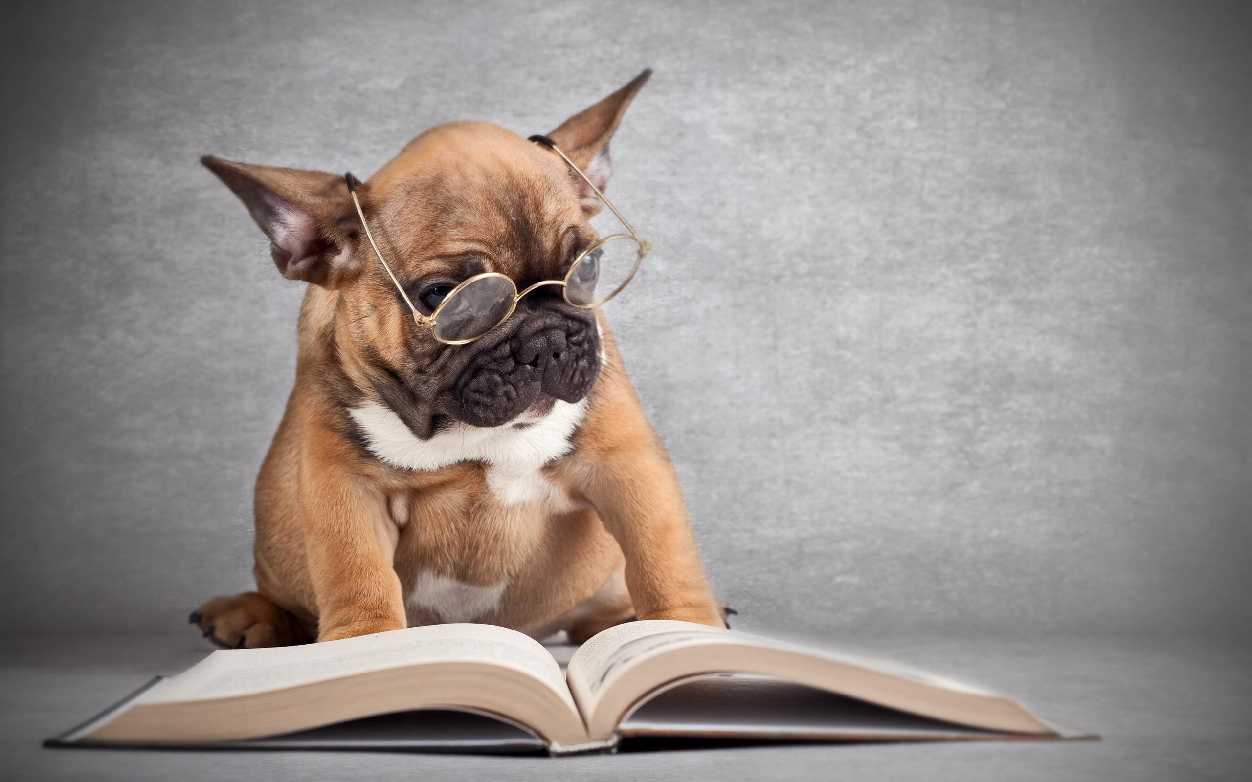 пес, ученый, очки