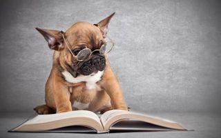 Бесплатные фото пес,ученый,очки,книга,читать,собаки,юмор
