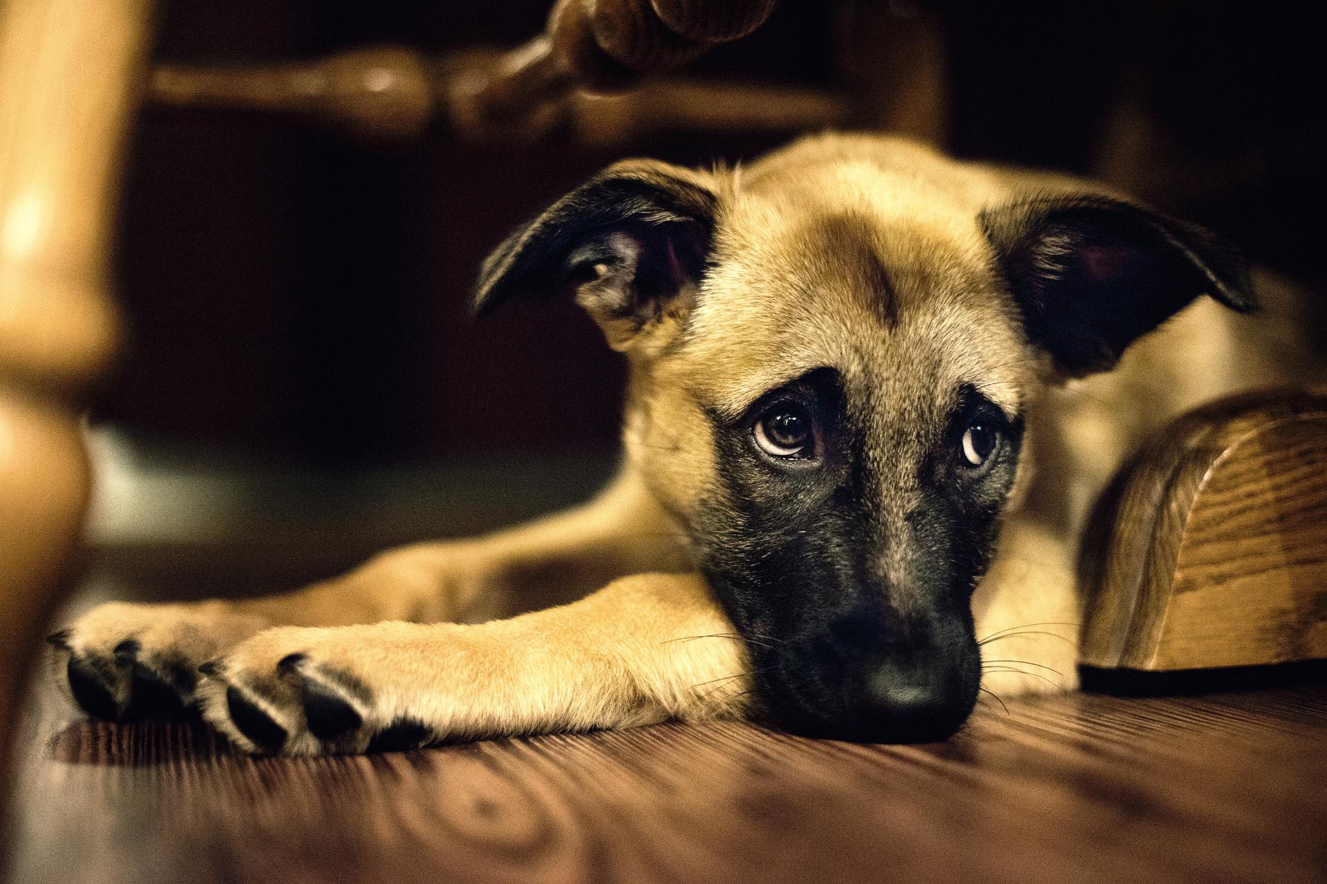грустных фото собачек