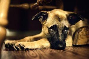 Заставки пес, уши, глаза