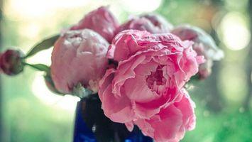 Заставки пионы, букет, ваза, бутон, лепестки, аромат, листья