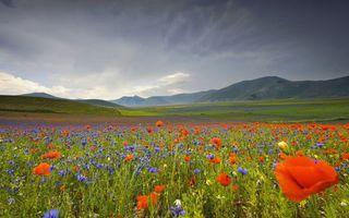 Заставки поле,цветы,красные,фиолетовые,лепестки,горизонт,простор