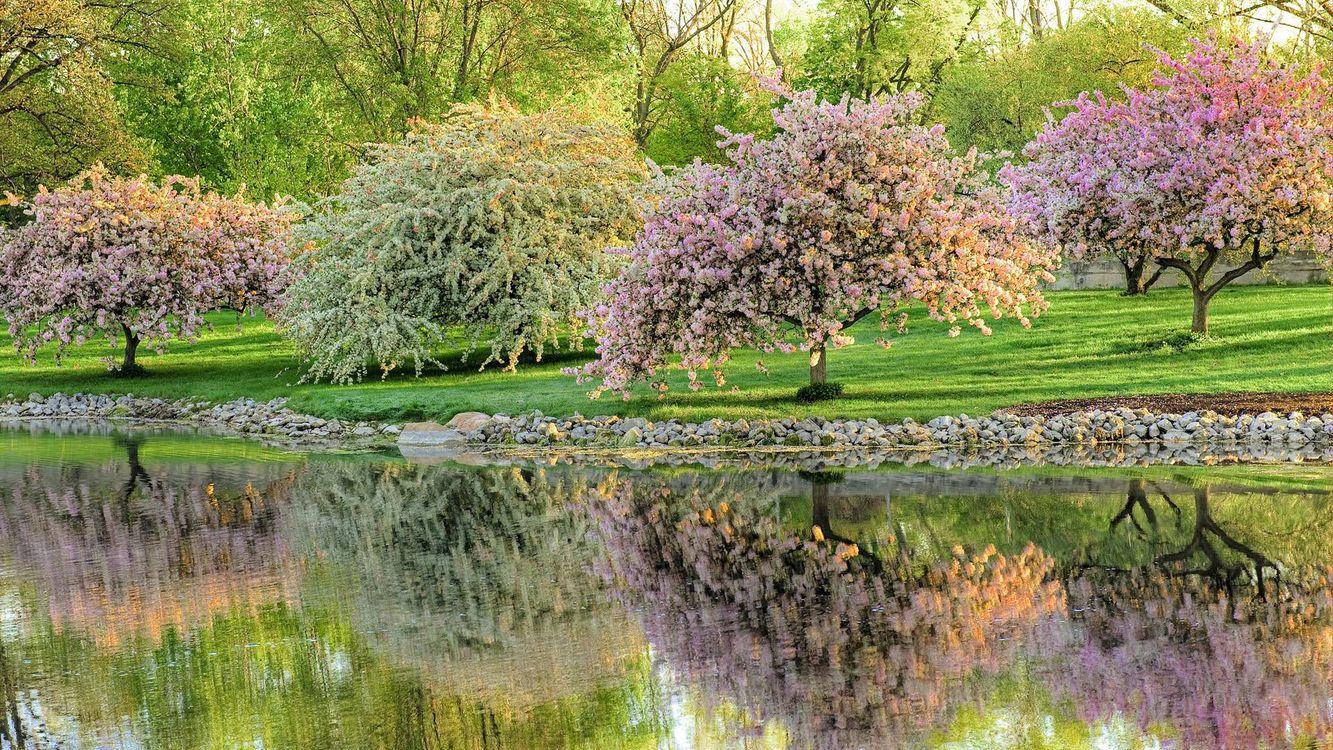 Фото бесплатно пруд, гладь, отражение, цветущие деревья, газон, камни, пейзажи