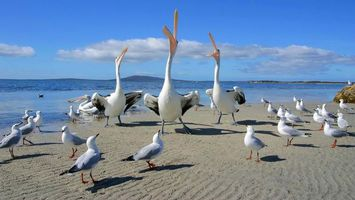 Фото бесплатно птица, клюв, длинный