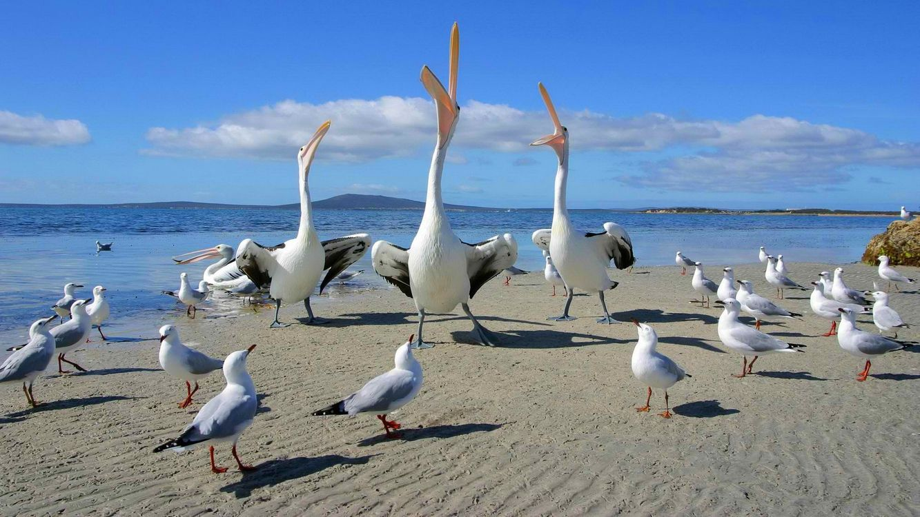 Фото бесплатно птица, клюв, длинный - на рабочий стол