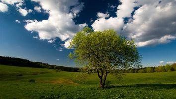 Фото бесплатно равнина, лес, деревья