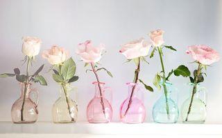 Обои розы, графины, вазы, стебли, листья, колючки, шипы, аромат, лепестки, цветы