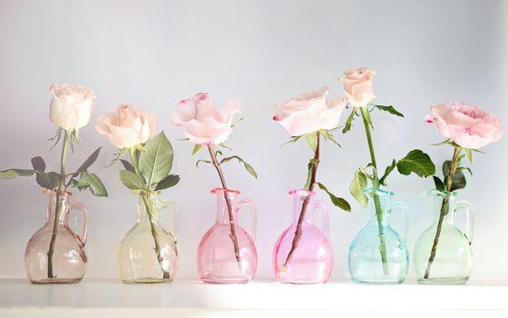 Бесплатные фото розы,графины,вазы,стебли,листья,колючки,шипы,аромат,лепестки,цветы