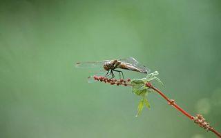 Бесплатные фото стрекоза,трава,ветка,крылья,глаза,фон,зеленый