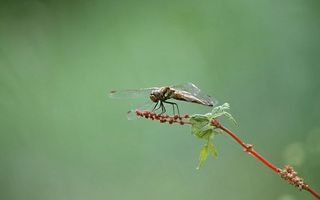 Photo free dragonfly, grass, branch