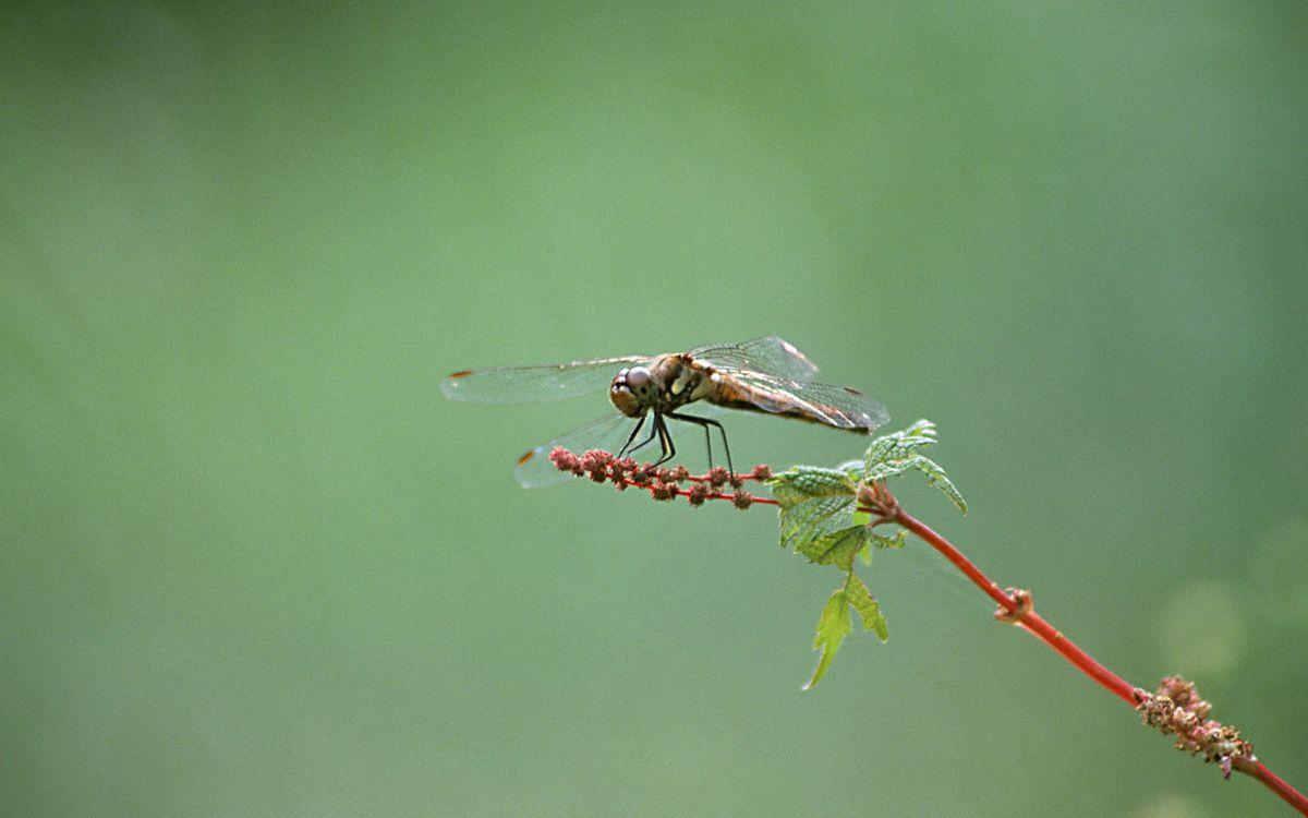 Free photo dragonfly, grass, branch - to desktop
