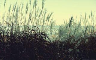 Фото бесплатно трава, поле, колоски