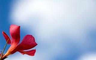 Бесплатные фото цветок,лепестки,красные,лист,зеленый,заставка,цветы