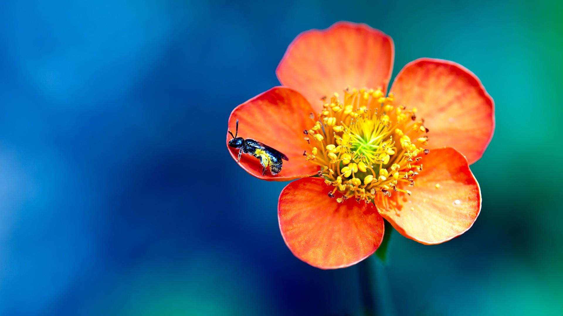 Красные оранжевые цветы без смс