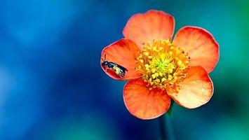 Бесплатные фото цветок,оранжевый,лепестки,пчела,тычинка,стебель,фон