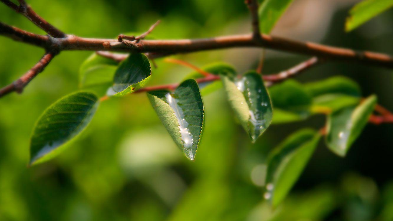 Фото бесплатно ветка, листья, зелень - на рабочий стол