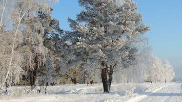 Бесплатные фото деревья,лес,снег,дорога,небо,голубое,природа