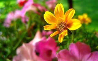 Бесплатные фото клумба,лепестки,желтые,стебли,листья,зеленые,фон
