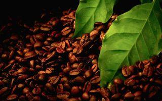 Фото бесплатно кофе, жареный, зерна, листья, зеленые, прожилки, разное