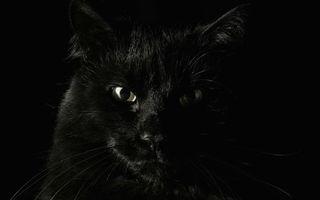Бесплатные фото кот, черный, взгляд, шерсть, усы, уши, глаза