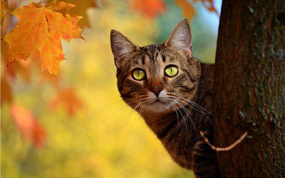 Фото бесплатно кот, глаза, зрачки
