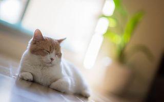 Фото бесплатно кот, сон, глаза