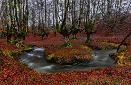 Фото бесплатно Лес, природа, речка