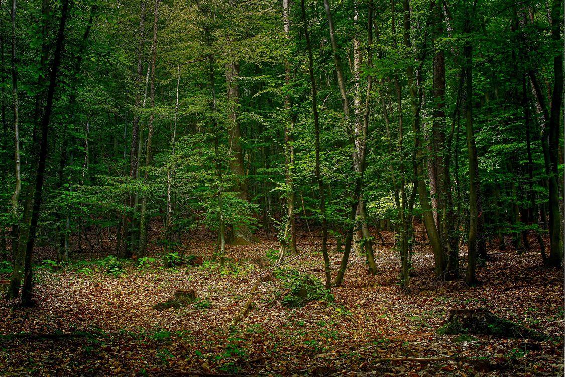 Фото бесплатно лес, деревья, осень, листья, елки, природа, природа - скачать на рабочий стол